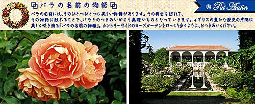 rose_name_6ph.jpg